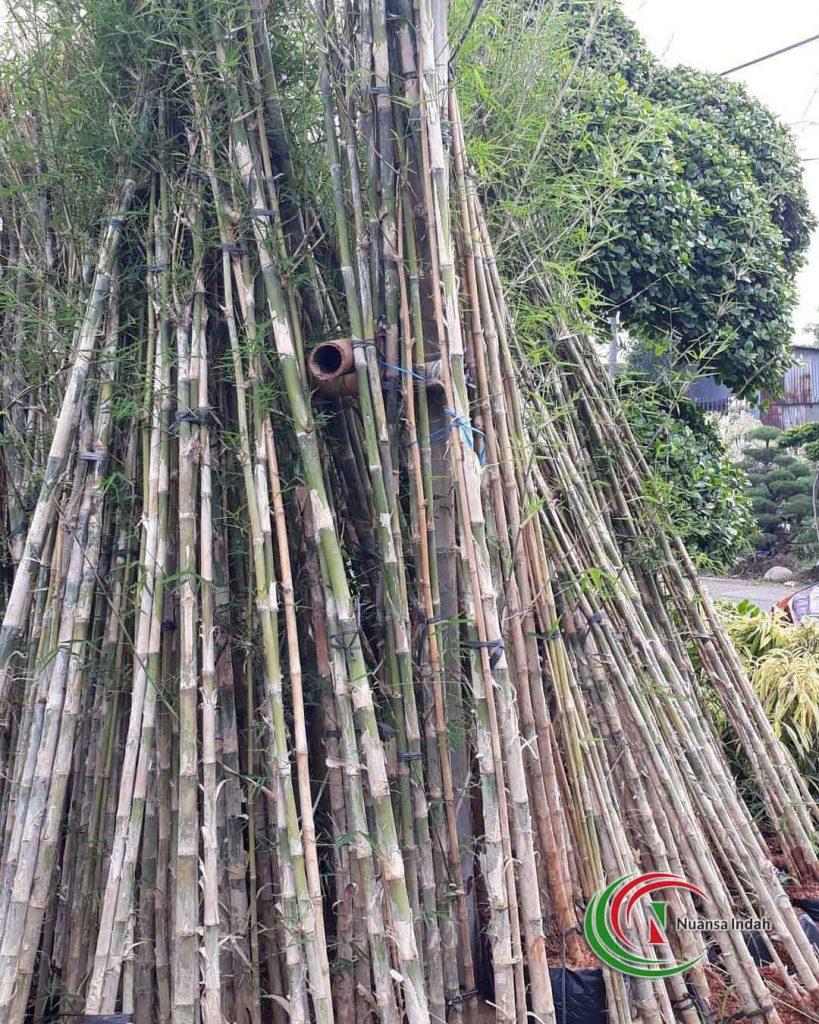 harga bambu jepang